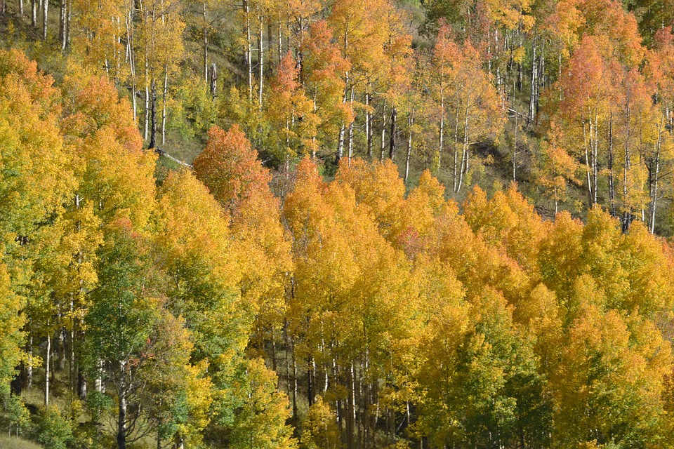 Motivational Monday – 'A Slice of Colorado's Autumn'
