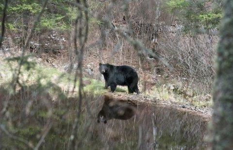 ROCKY MOUNTAIN NATIONAL PARK SERIES – BEAR SCAT HELPS REBUILD RMNP NATURAL RESOURCES